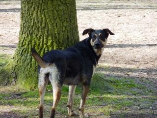 kyara in het bos
