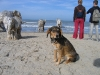 Lotje-op-het-strand