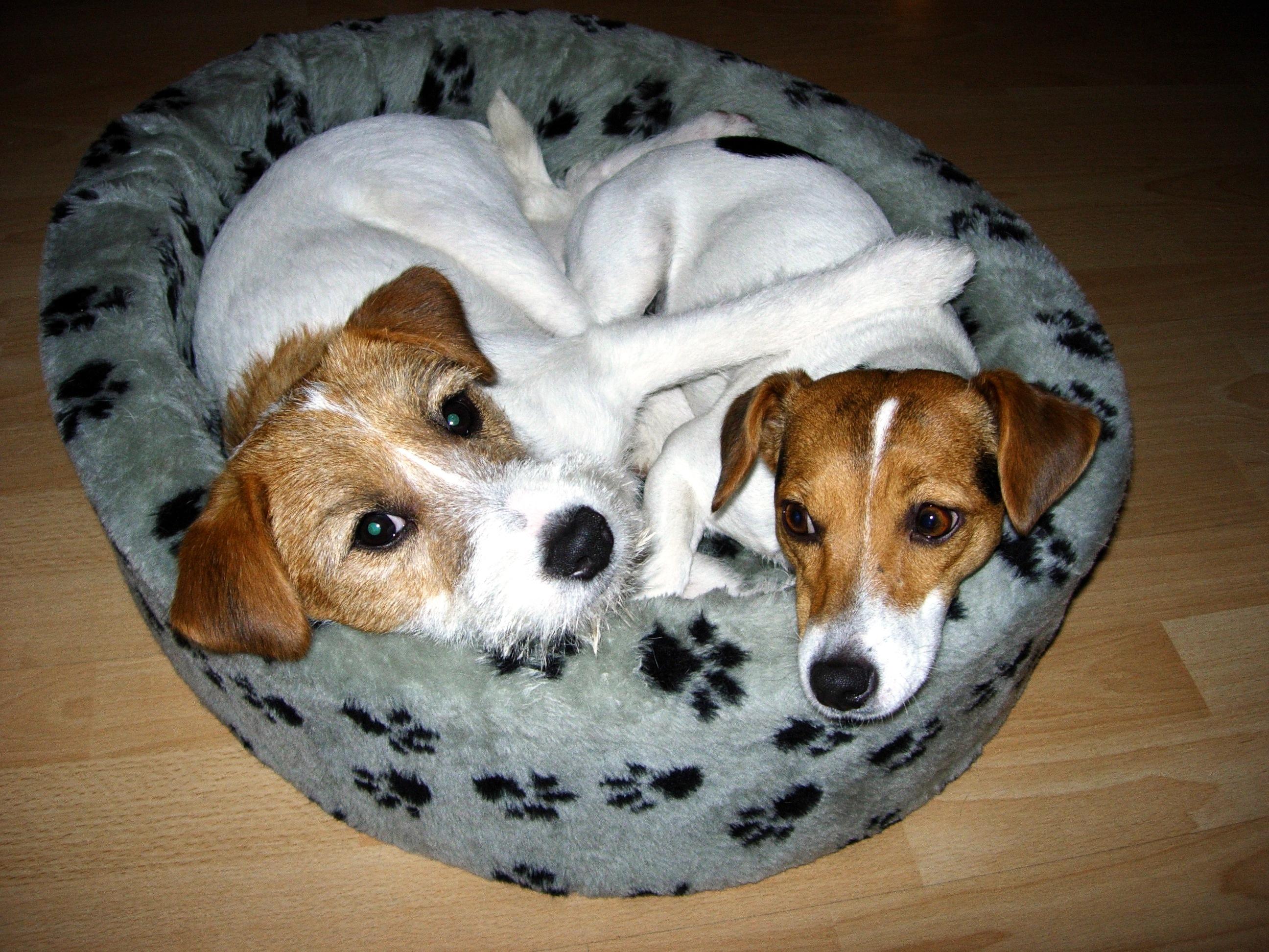 Zenda&Ollie